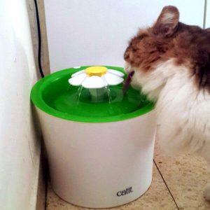 מזרקה לחתול catit